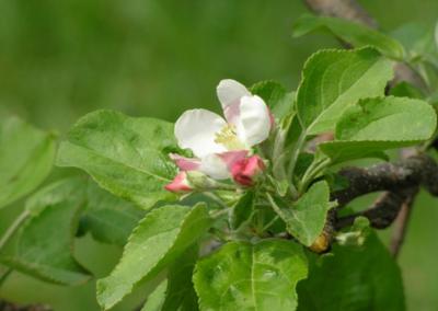 1st Bloom 5.7.07
