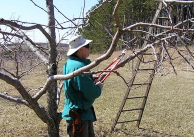 Holster Ladder Lopper Ready